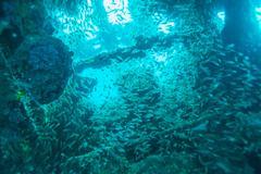 School of Glass Fish inside Shipwreck Stock Photos