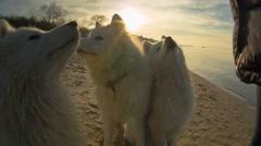 Three Dogs on the Beach Stock Footage