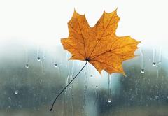 Meteorology, forecasting and autumn weather season concept - yellow maple lea Stock Photos