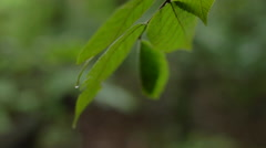 Detail of a Water Droplet on a Leaf in Shallow Focus Arkistovideo
