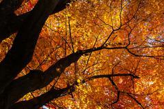 Autumn Colours in Japan Stock Photos