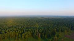 Aerial view Siberian pine taiga Stock Footage