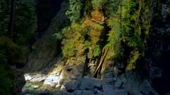 4K Forest Nature Creek, Gentle Water Flow, Mountain Landscape Stock Footage