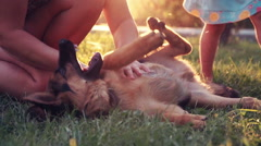 Excite puppy dog rolling on grass Stock Footage