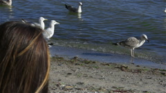 Seagulls fight over bread which he throws a young girl. Slowmotion Stock Footage