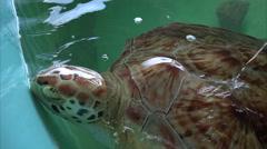 Injured Sea Turtle is Nursed Back to Health on South Padre Island, Texas Stock Footage