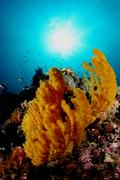 Coral life diving Underwater Papua New Guinea Pacific Ocean Stock Photos