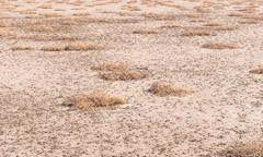 Dried salt lake shore Stock Photos