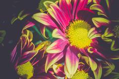 Aster Flower Retro Stock Photos
