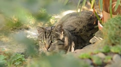 Cat resting in the garden, real time, no sound, no camera movement Stock Footage
