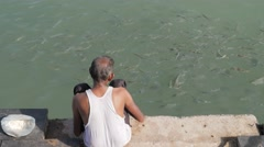 Man feeding fish on ghats,Dwarka,India Stock Footage