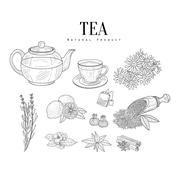 Natural Ingredients And Tea Isolated Hand Drawn Realistic Sketches Stock Illustration
