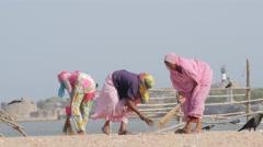 Women sweeping dried fish,Diu,India Stock Footage