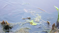 Snake floating in river Stock Footage