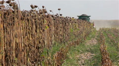 Combine Harvester on a Sunflower Field. Front view Stock Footage