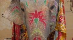 Face of elephant painted for festival,Jaipur,Gangaur,India Stock Footage