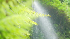 Los Tilos (La Palma)- slow motion of water that cascaded down into the valley Stock Footage