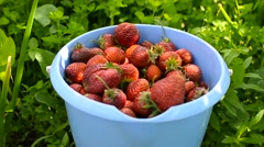 Strawberry in a bucket Stock Footage