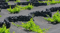 The rock walls protects vine cultivation from the climate weatherproof Stock Footage