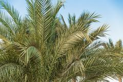 Green palm trees Stock Photos