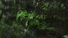 Detail of Rain Falling on Cliff Plant Slow Motion Stock Footage