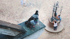 One dove flies away from the other pigeon Arkistovideo