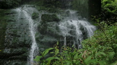 Los Tilos- Water gushing from the rocks and nourishes the plants in the forest Stock Footage
