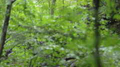 Pan Down of Small Waterfall on a Cliff Stock Footage