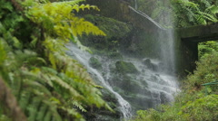 Los Tilos ( La Palma)-Water flowing through a vibrant rainforest Stock Footage