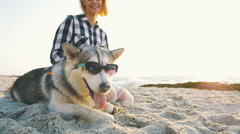 Siberian husky dog in sunglasses on the beach at sunset or sunrise Stock Footage