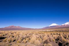 High Andean tundra landscape in the mountains of the Andes. Stock Photos