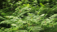 Lush foliage moved by the wind in the jungle Stock Footage