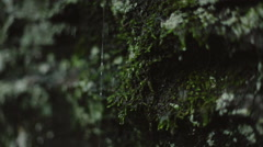 Pan Up of Rain Dripping off Moss on a Cliff Stock Footage