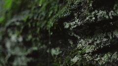 Rain Dripping off of Moss on a Cliff Stock Footage