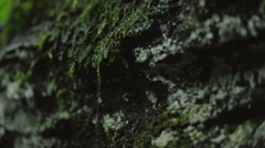 Pan of Rain Dripping off of Moss on a Cliff Stock Footage