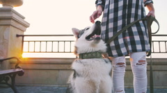 Young female walking with siberian husky dog on sea front at sunrise, slowmo Stock Footage