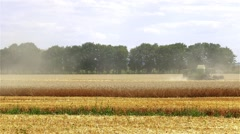 Harvester in wheat rye field HD video. Agriculture rural combine crops grain. Stock Footage