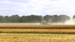 Harvester in wheat rye field 4k video. Agriculture rural combine crops grain. Stock Footage
