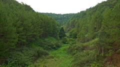 View of Pine Forest with Old River-bed Covered with Green Grass Stock Footage