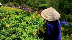 Woman Picks up Flowers on Flowerbed in Garden in Vietnam Stock Footage
