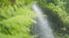 Waterfalls in a lush forest- Los Tilos Waterfall La palma Stock Footage