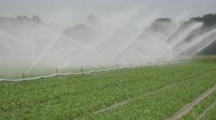 Water sprinkler on field,Noord Holland,Netherlands Stock Footage