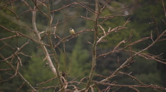 Kingfisher eats worm Stock Footage