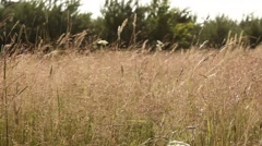 Field grass. Meadow in the forest Stock Footage