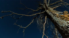Old scary dry tree Stock Footage