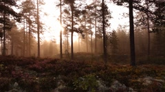 Swedish forest in summer - sweden Stock Footage