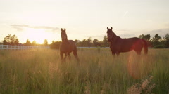 SLOW MOTION: Two beautiful dark brown horses running fast on vast meadow field Stock Footage