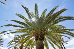 Palm tree foliage with starry sun Stock Photos