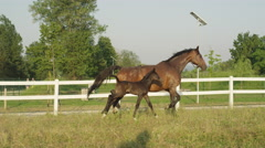 SLOW MOTION: Adorable mare and newborn colt running along white corral Stock Footage