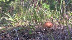 Mushroomer Stock Footage